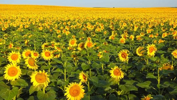 A Dunántúl egyik tájegysége, a mezőföld, kiváló termőadottságú földekkel.