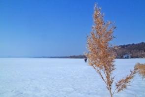 Téli táj, befagyott Balaton.