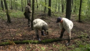 Bakony, gombaszedők az erdőben.