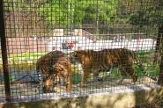 Veszprém, Zoo.